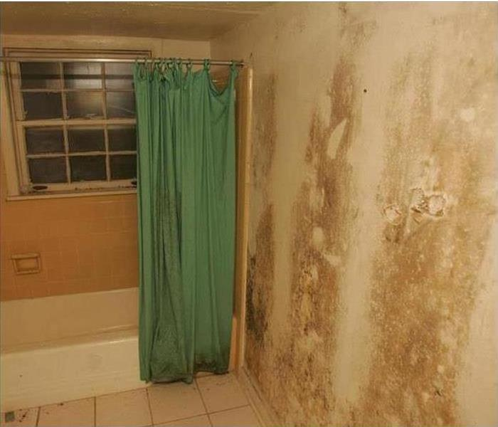 Mold Remediation When Mold Invades